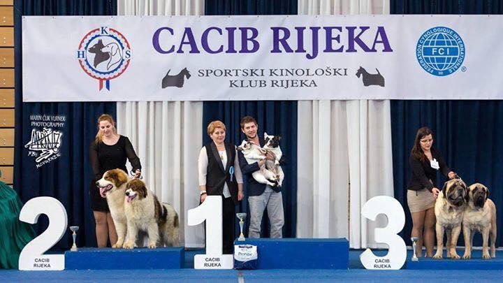 CACIB Rijeka 20172