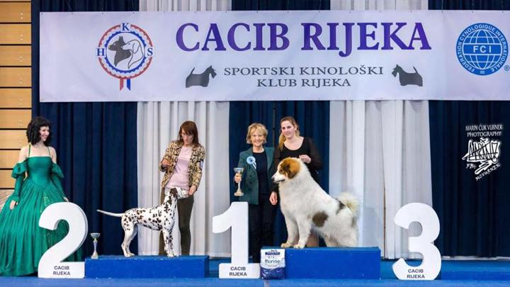 CACIB-Rijeka-20173